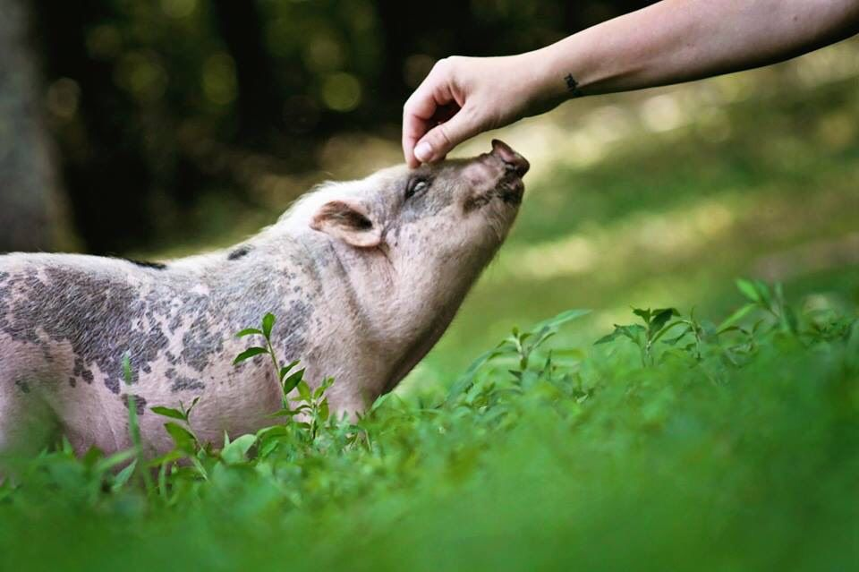 Piccolo Farms Is Home to Pigs, Chickens, a 40-Year-Old